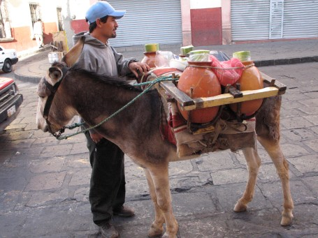 Zacatecas Burro